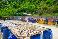 NGAPALI, MYANMAR- SEPTEMBER 25, 2016: The process of drying fresh fish in the sun, an ancient method of food preservation in Ngapa Stock Photo