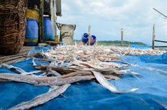 NGAPALI, MYANMAR 25 SEPTEMBRE 2016 : Le processus de sécher le poisson frais au soleil, une méthode antique de conservation des a photographie stock libre de droits