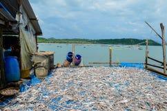 NGAPALI, MYANMAR 25 SEPTEMBRE 2016 : Le processus de sécher le poisson frais au soleil, une méthode antique de conservation des a photo libre de droits