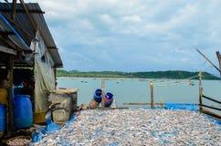 NGAPALI, MYANMAR 25 SEPTEMBRE 2016 : Le processus de sécher le poisson frais au soleil, une méthode antique de conservation des a image stock