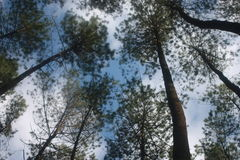 ngargoyoso del bosque Foto de archivo