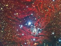 NGC 2264 Christmas Tree Cluster and Nebula. Imaged with a telescope and a scientific CCD camera stock images