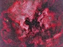 NGC 7000 North America Nebula Royalty Free Stock Image