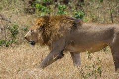 Ngorongoro火山口徒步旅行队 库存照片
