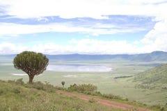 Ngorongoro火山口的全景,坦桑尼亚 库存图片