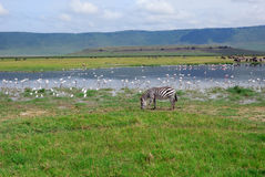 Ngorongoro conservation area Stock Image