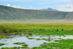 Ngorongoro conservation area Royalty Free Stock Photo