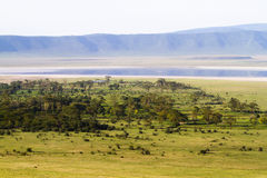 Ngorongoro crater Royalty Free Stock Photography