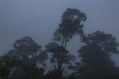 Ngorongoro Crater Fog Landscape. Ngorongoro Crater Landscape on a Foggy Day, Tanzania, Africa royalty free stock image