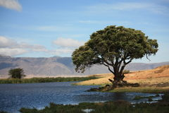 Ngorongoro Crater landscape Stock Photography