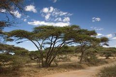 Ngorongoro da paisagem 019 de África Foto de Stock Royalty Free