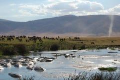 Ngorongoro de Waterhole Imagens de Stock Royalty Free