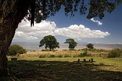 Ngorongoro di paesaggio 016 dell'Africa Fotografia Stock