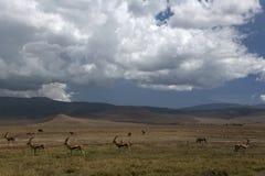 Ngorongoro di paesaggio 035 dell'Africa Immagini Stock