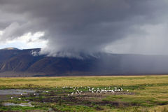 Ngorongoro-Krater Stockfoto