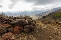Ngorongoro krater Royaltyfria Bilder