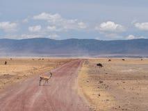 Ngorongoro krater Obraz Stock