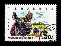 Ngorongoro krater, Czarna nosorożec, obywatel (Diceros bicornis) Obraz Royalty Free