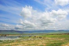 Ngorongoro krateru sceneria Tanzania, Afryka Zdjęcie Royalty Free