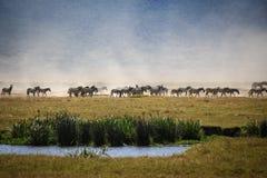 Ngorongoro löst liv Royaltyfri Fotografi