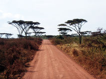 Ngorongoro road Stock Images