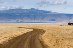 Ngorongorokrater Stock Afbeelding