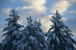 NH的森林在天空的多雪的天艺术 免版税库存图片