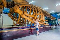 NHA TRANG, ΒΙΕΤΝΆΜ - 16 Ιανουαρίου 2017 σκελετός φαλαινών Α στο εθνικό ωκεανογραφικό μουσείο Οι προσφορές που ενδιαφέρουν τα εκθέ Στοκ φωτογραφίες με δικαίωμα ελεύθερης χρήσης