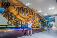 NHA TRANG, ΒΙΕΤΝΆΜ - 16 Ιανουαρίου 2017 σκελετός φαλαινών Α στο εθνικό ωκεανογραφικό μουσείο Οι προσφορές που ενδιαφέρουν τα εκθέ Στοκ Εικόνα