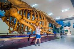 NHA TRANG, скелет кита ВЬЕТНАМА - 16-ое января 2017 a на национальном океанографическом музее  Экспонаты предложений интересные стоковое фото rf
