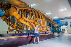 NHA TRANG, VIETNAM - JANUARY 16, 2017 A whale skeleton at the National Oceanographic Museum of . The offers interesting exhibits royalty free stock photo