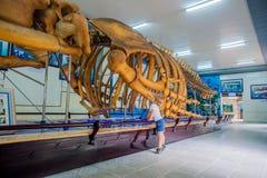 NHA TRANG, VIETNAM - 16 janvier 2017 squelette de baleine d'A au musée océanographique national de Les objets exposés intéressant Photos libres de droits