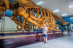 NHA TRANG, VIETNAM - 16 janvier 2017 squelette de baleine d'A au musée océanographique national de Les objets exposés intéressant Photographie stock