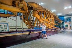 NHA TRANG, VIETNAM - 16 janvier 2017 squelette de baleine d'A au musée océanographique national de Les objets exposés intéressant Photo libre de droits