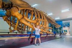 NHA TRANG, VIETNAM - 16 janvier 2017 squelette de baleine d'A au musée océanographique national de Les objets exposés intéressant Image stock