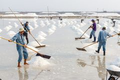 Workers organize salt into piles at the Hon Khoi salt fields in Royalty Free Stock Photography