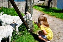 Niña adorable que alimenta una cabra en el parque zoológico en día de verano soleado caliente Imagenes de archivo