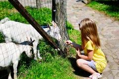 Niña adorable que alimenta una cabra en el parque zoológico en día de verano soleado caliente Imagen de archivo libre de regalías