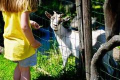 Niña adorable que alimenta una cabra en el parque zoológico en día de verano soleado caliente Foto de archivo libre de regalías