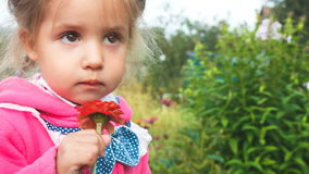 Niña adorable que huele una flor roja Primer almacen de video