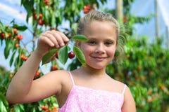 Niña adorable que lleva a cabo cherrys en jardín de la cereza Foto de archivo libre de regalías