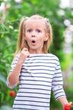 Niña adorable que recoge los pepinos de la cosecha y Fotos de archivo