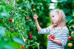 Niña adorable que recoge los pepinos y los tomates de la cosecha en invernadero Imagen de archivo