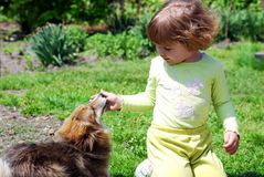 Niña con el perro de animal doméstico Fotos de archivo libres de regalías