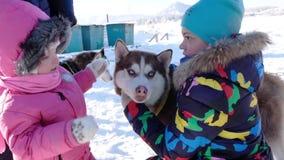 Niña con el perro esquimal Bebé lindo con el perro metrajes