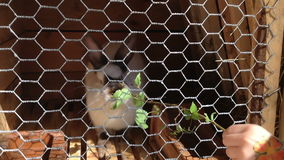 Niña con la imagen de la flor en las alimentaciones de una mano que el conejo sale e hierba almacen de metraje de vídeo