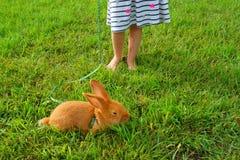 Niña con un conejito rojo en una hierba verde imagen de archivo