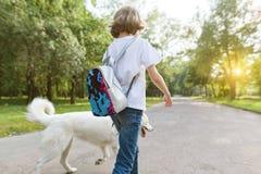 Niña con un perro fornido blanco que camina abajo del camino en el parque fotos de archivo
