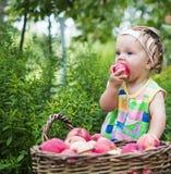Niña con una cesta de manzanas rojas fotos de archivo