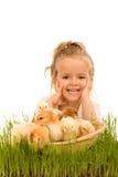 Niña con una cesta llena de pequeños pollos Foto de archivo